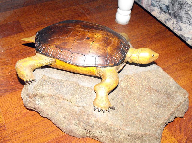 Snapping_turtle_DSCF0804