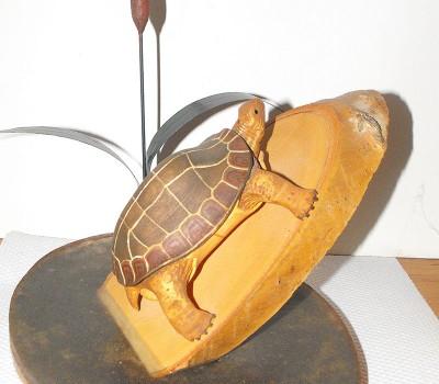 Terappin Turtle